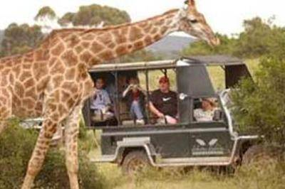 open-landrover-game-drives